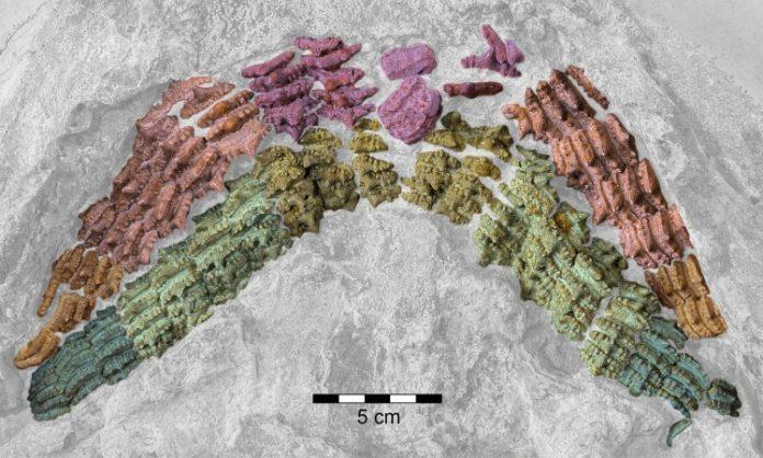 Spektakularno otkriće: 150 miliona godina star fosil ajkule