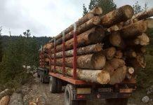 Drvni sektor BiH nastavio trend rasta izvoza i u prva dva mjeseca ove godine