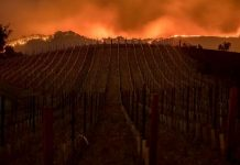 Požar Dixie postao drugi najveći u historiji Kalifornije