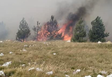 Požar u Stocu ugrozio naseljena mjesta